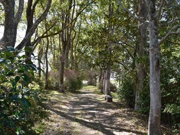 千間土居公園