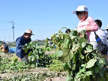 黒枝豆収穫祭