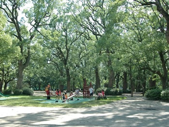 中ノ島公園(クスノキ林)