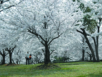 竜光寺公園