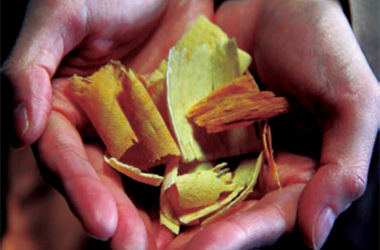 樟のチップ